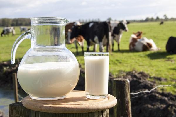 tejtermelés