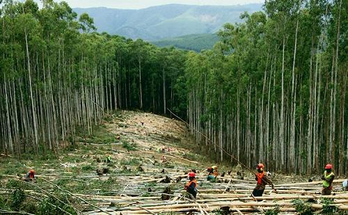 Erdészeti területen is együttműködik Kína a 16 kke országgal