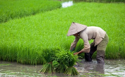 Kína 450 milliárd USD-t fordít a mezőgazdaság modernizálására