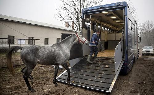 Kína lovakat vett hazánktól